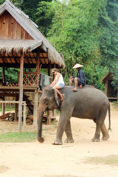 el sofa amarillo montar en elefante en laos (12)