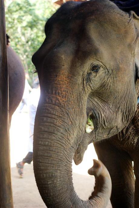 el sofa amarillo montar en elefante en laos (21)