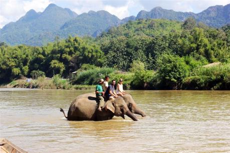 el sofa amarillo montar en elefante en laos (27)